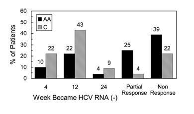 The percentage of African Americans and Caucasians who become HCV RNA undetectable at various time points during treatment, and those with partial and null response