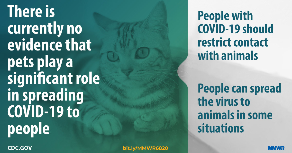 Information on COVID-19 and pets CDC