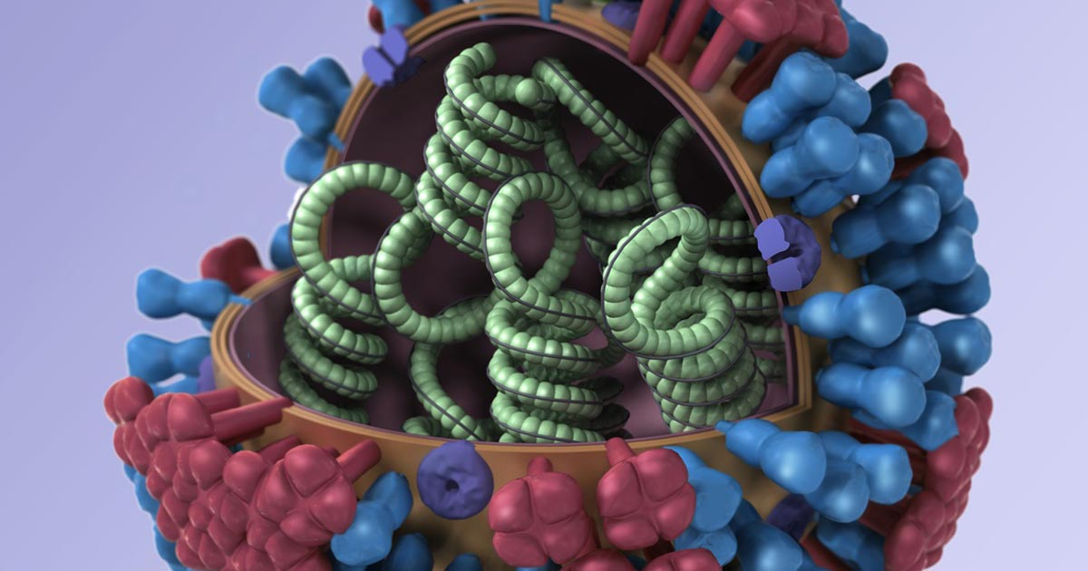Influenza virus, credit: CDC/illustrator: Dan Higgins