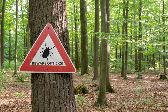 Photo of a tick wanring in the woods