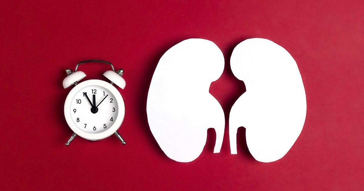 Clock and kidney